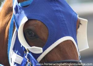What do horses wear around their eyes, Horse Blinkers