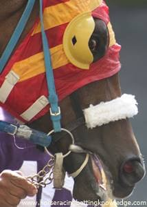 Thoroughbred horse racing equipment blinkers with cheater holes