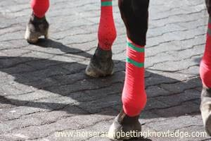 Why do horses wear bandages on their legs