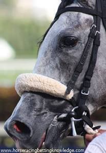 What are the things on horses nose, Shadow Rolls