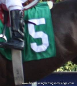 Horse Racing Saddle cloth numbers