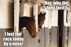 Horse Humor Funny Horse Names That Will Make You Laugh