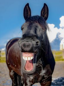 laughing-horse