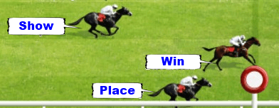 Beginner's Guide To Horse Racing