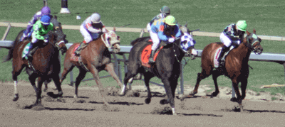 Types and Classes of Horse Racing