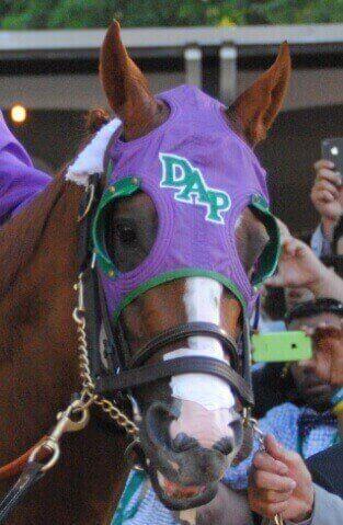 Horse Nasal Strips