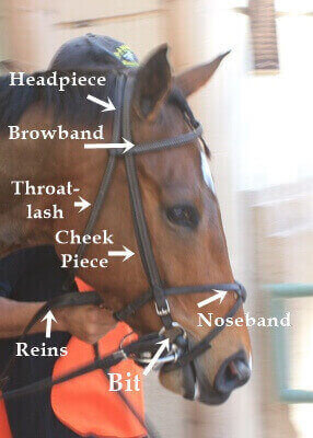Horse Racing Equipment