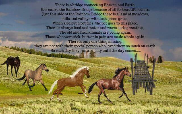 Rainbow Bridge for Horses